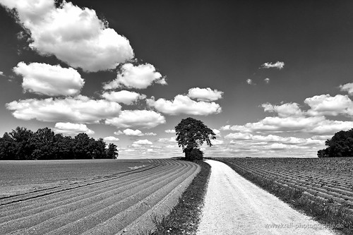 Field - road - tree [explored] | by www.krall-photography.com