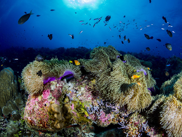 Coral Reefs Live