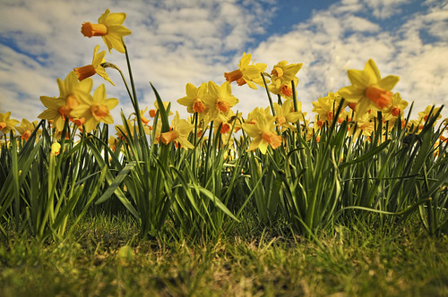 Spring Has Sprung | by DonaldOgg