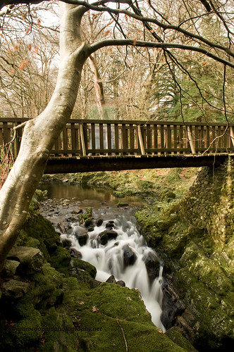 Tollymore Forestpark | by Ryan McD