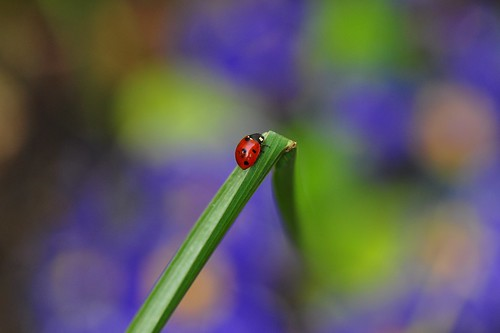 Journey of a Ladybug; to be continued..., | by natureloving