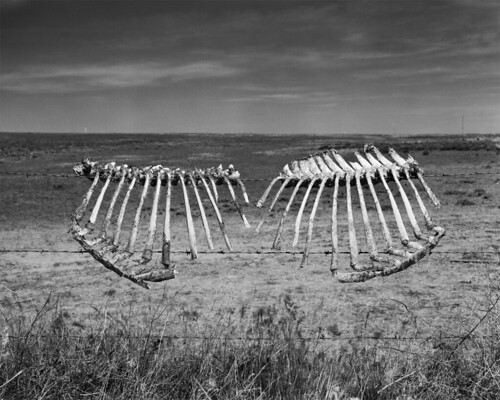 Fences - Thorp, WA | by Maclaine Diemer