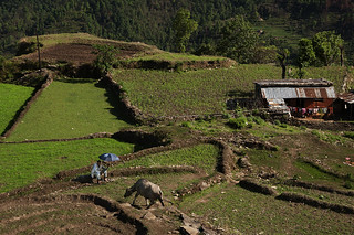 nepali landscape___day 28 | by still very busy, trying to catch up
