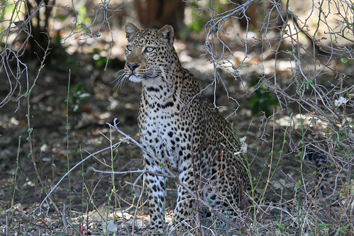 south luangwa @zambia | by gepiblu