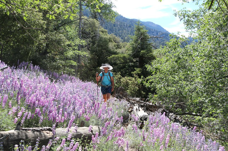 Vicki happy amongst the blooming Lupines on the Momyer Trail