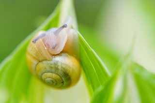 The snail | by le cabri