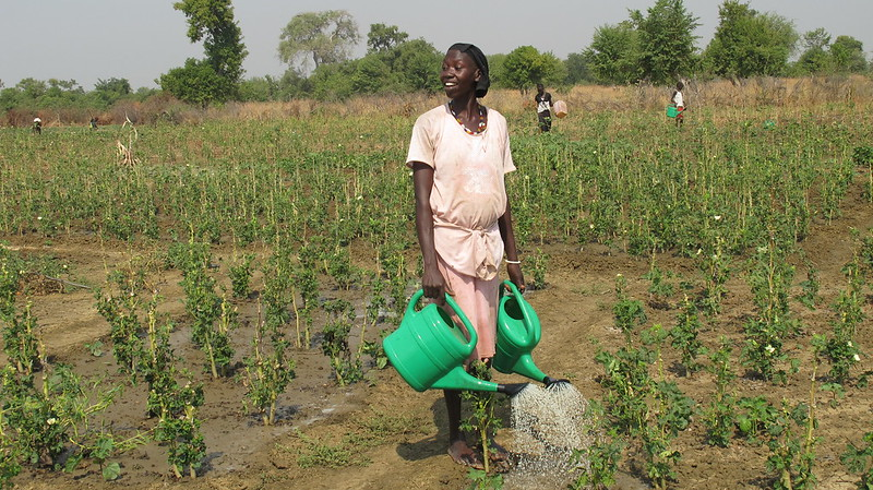 Women working in a vegetable garden in Aweil, South Sudan, where they are growing eggplant, tomatoes, okra and other vegetables to sell and use for their own family meals
