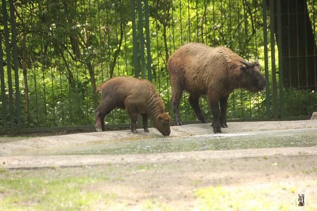 Tierpark Friedrichsfelde 29.05.201649