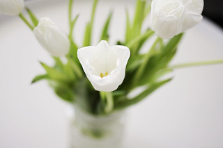 close up, white tulips | by AMM blog
