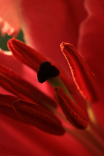 Inside Red (8) | by Wilamoyo