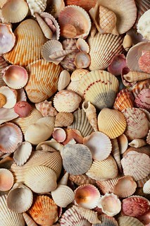 seashells photo | by lauratrevey