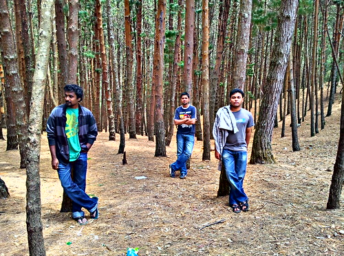 Pine Forest | by Nirmal Lourdh Rayan