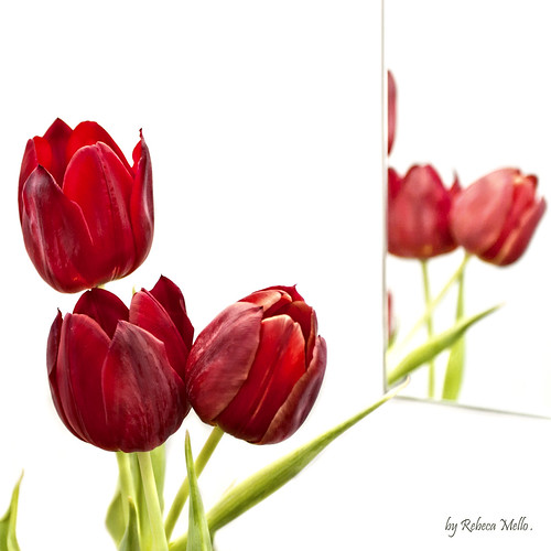 Tulips and a mirror.. | by Rebeca Mello