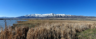 Mountains and Bullrushes | by Pat's Pics36