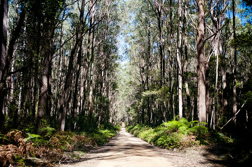 Dirt road through the trees | by Pink Thistle