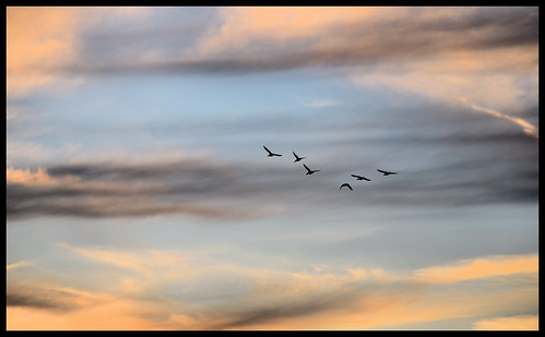 Birds in Flight. | by BamaWester