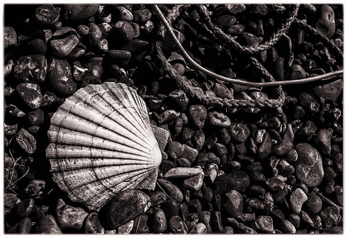 Scallop Shell | by Richard Reader (luciferscage)