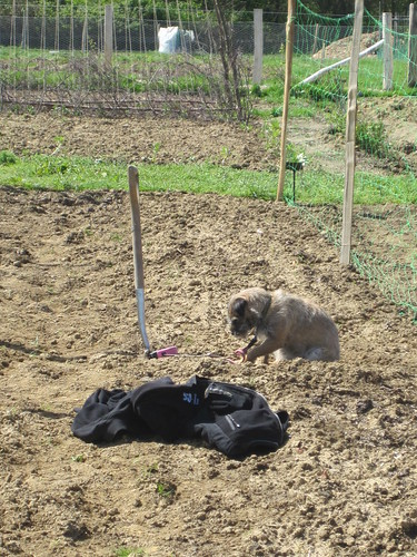 Doggie Digging | by John of Witney