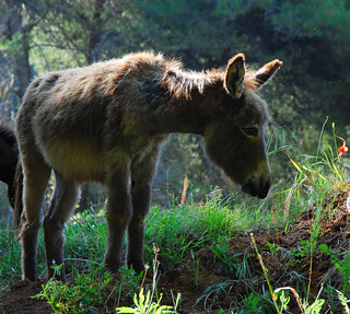 From the archives: Donkey | by roksoslav