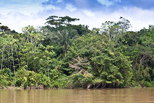 Amazonas | by The Colombian Way