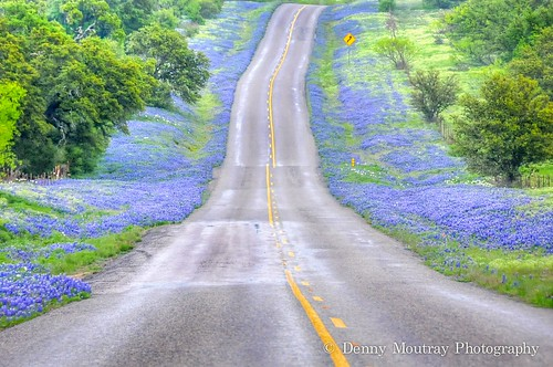 Wildflower Road | by DMoutray - Denny Moutray Photography