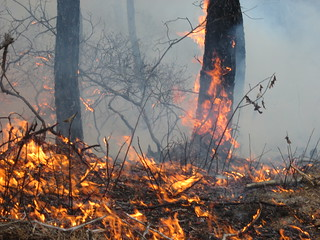 Burning for People and Wildlife | by U. S. Fish and Wildlife Service - Northeast Region