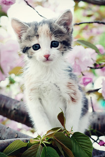 Kittens Grow In Trees | by Leah Fauller