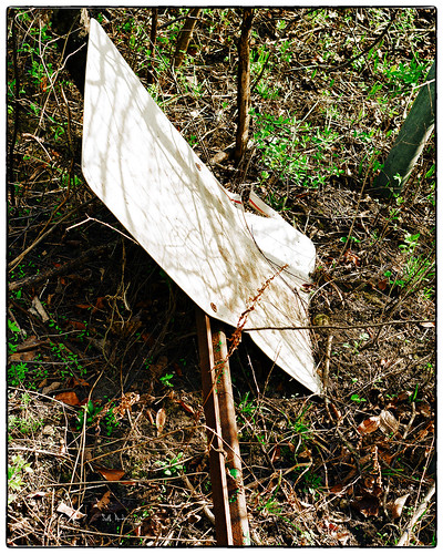 Forgotten Commandment | McDowell Grove Forest Preserve ...