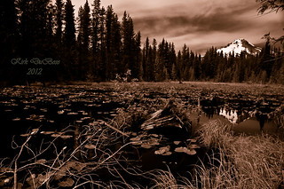Lily Pads and Mt Hood | by Kirk DuBose