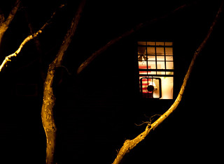 Window Fan & Branches at Night - Sunnyside, Queens | by ChrisGoldNY