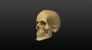 3d_skull.bone_coloured_and_textured_3quarter.view | by Graemeski