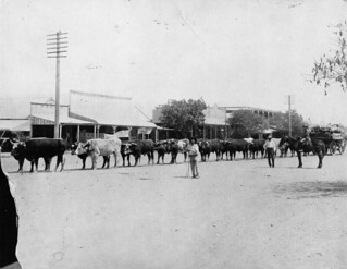 Bullock team on Elderslie Street, Winton | by State Library of Queensland, Australia