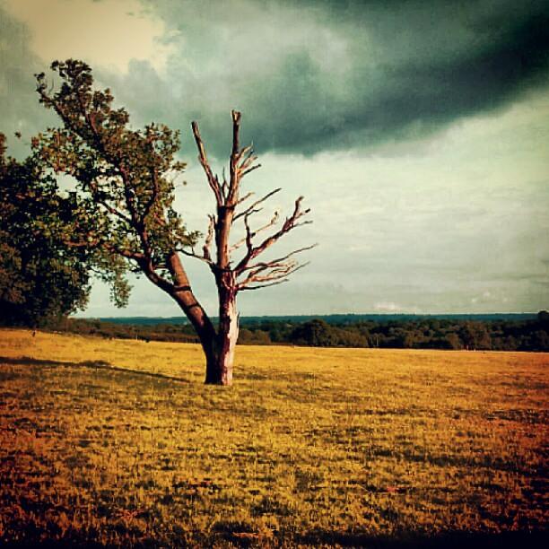 Half Dead Half Alive Tree Dead Alive Chislehurst Ken Flickr
