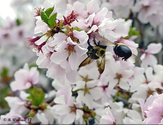 Busy Bees | by starg82343