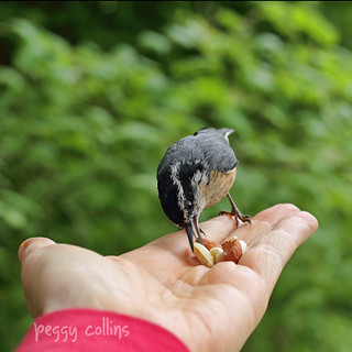 Nutty selects the finest peanut | by Peggy Collins