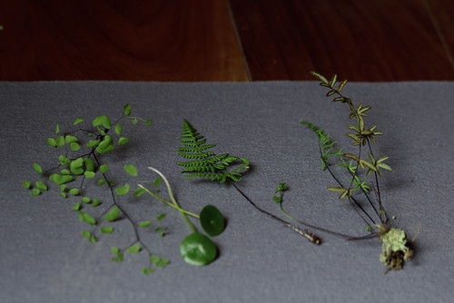 Woodland Specimens | by Geninne