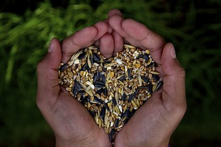 Love seeds | by Saul_Good