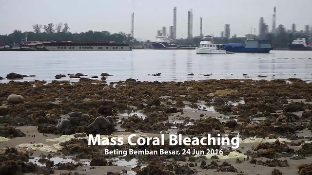 Mass coral bleaching survey at Beting Bemban Besar, 24 Jun 2016