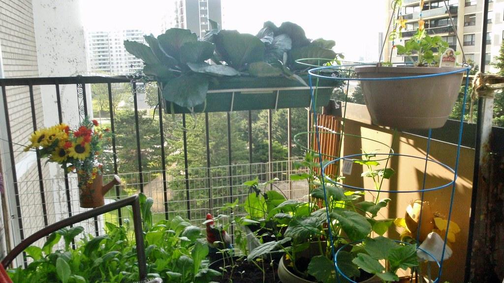 Balcony garden east