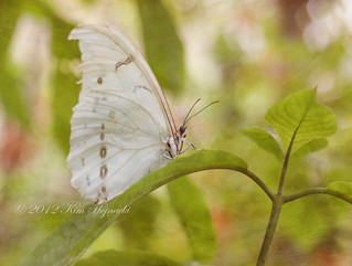 White Beauty | by KimHojnackiPhotography