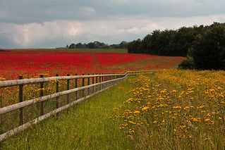 Red and yellow fields | by V Photography and Art