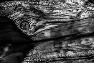eyes of the trees | by tmo-photo