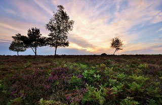 New Forest | by Mike Dorey
