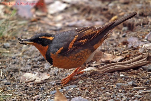 how to get rid of male thrush