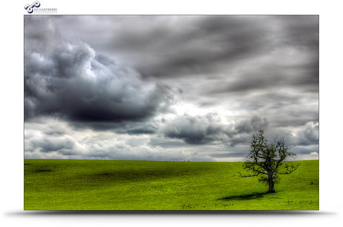 323/365 - Tree & Clouds | by Richard Berry Photography