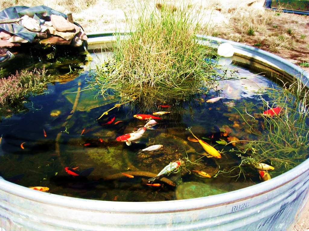 ... Stock Tank Water Garden | By Jclarson