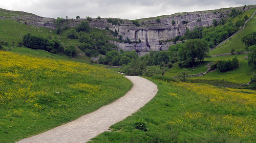 A buttercup-filled field leading to the cliffs on our Malham walk in the Yorkshire Dales of England