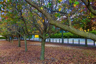 Autumn leaves………………where's it going and what follows? | by Andy Burton Oz
