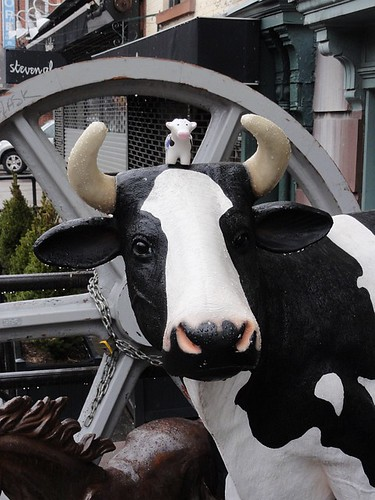 Cow on cow in Brooklyn | by Simon Chilton