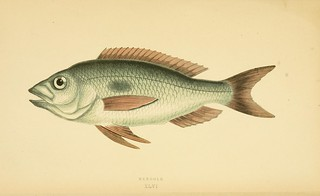 n311_w1150 | by BioDivLibrary